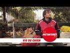 Instantarés - Vie de chien